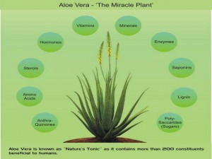 A brief list of the compounds found in aloe vera